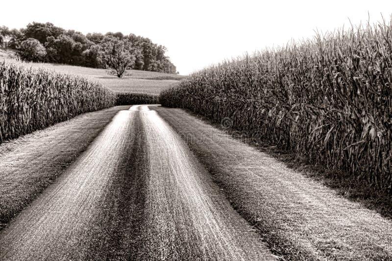 Landsväg och högväxta havrefält i lantliga Amerika royaltyfria bilder