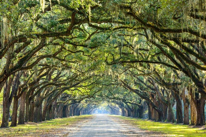 Landsväg som fodras med ekar arkivbild
