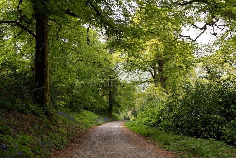 Landsväg som leder till och med frodig skog i Irland royaltyfria bilder