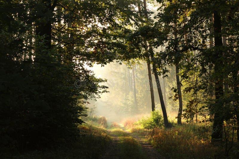Landsväg till och med en dimmig höstskog på soluppgång arkivfoto