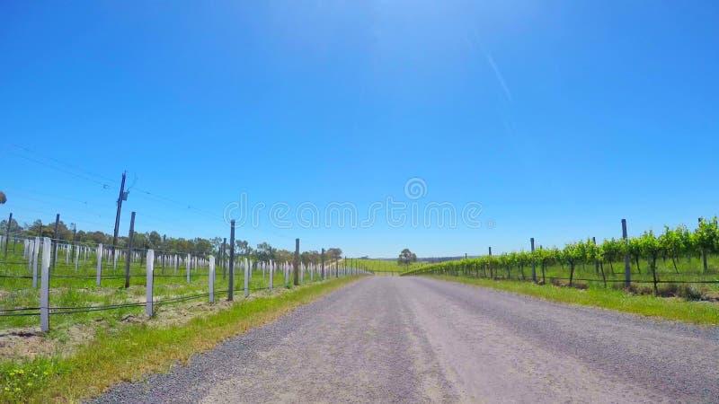 Landsväg till och med rader av unga druvavinrankor i McLaren dal, södra Australien royaltyfri bild