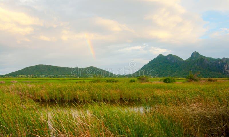landswamp fotografering för bildbyråer