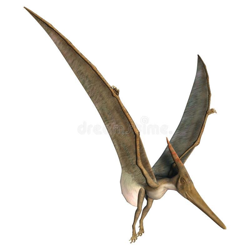 Landung Pteranodon lizenzfreie abbildung