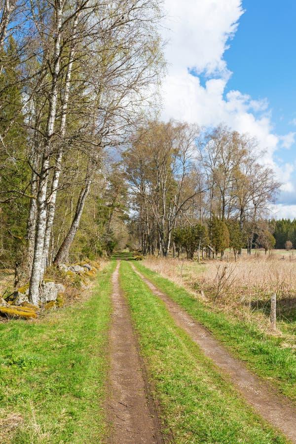 Landweg bij de rand van het bos stock afbeeldingen