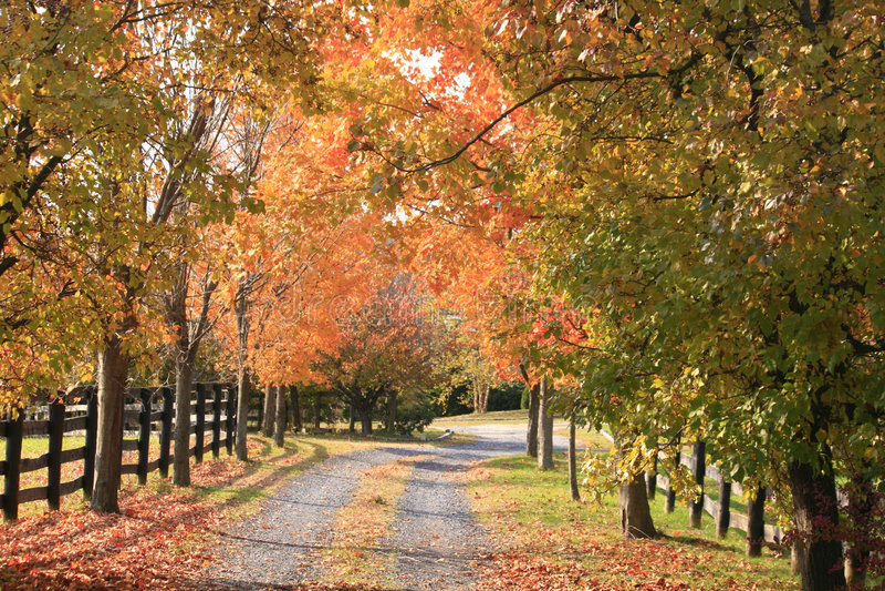 Landweg in de herfst stock afbeeldingen
