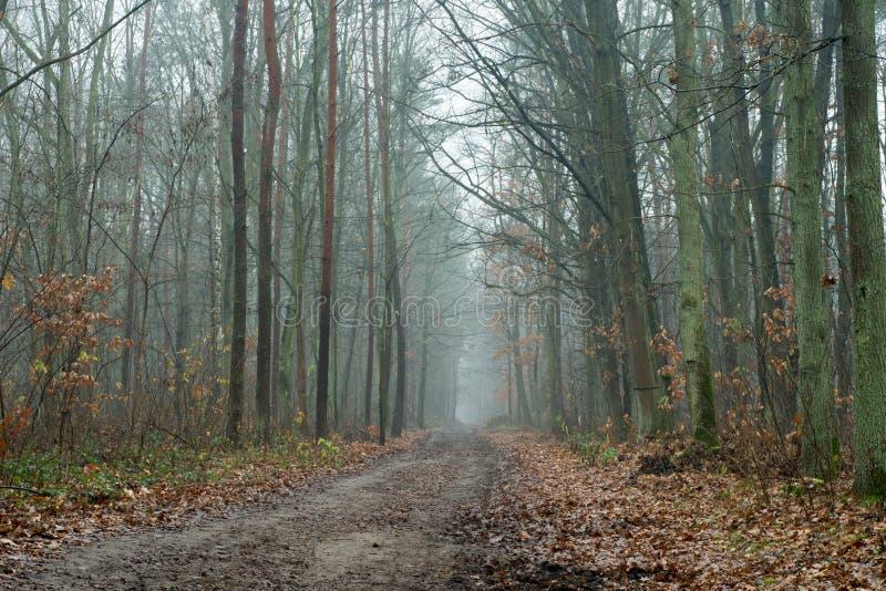 Landweg in de herfstbos stock afbeeldingen