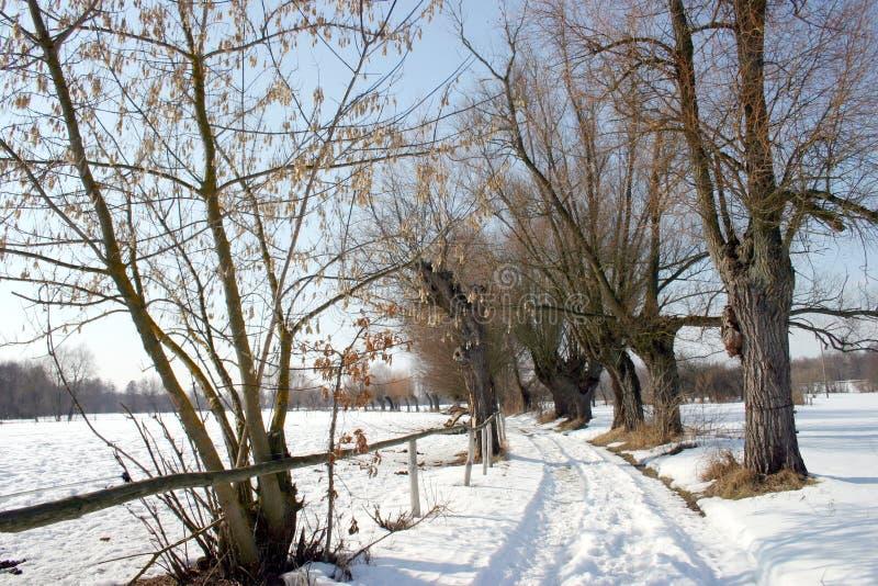 Landweg in de winter stock afbeelding