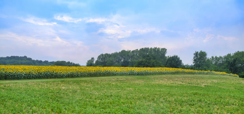 Landweg dichtbij Vigolo Marchese Piacenza, Italië stock afbeeldingen