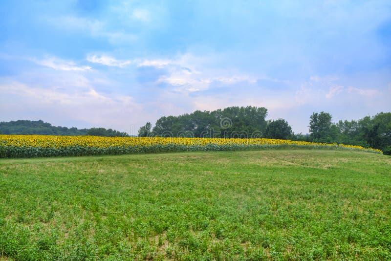 Landweg dichtbij Vigolo Marchese Piacenza, Italië stock foto