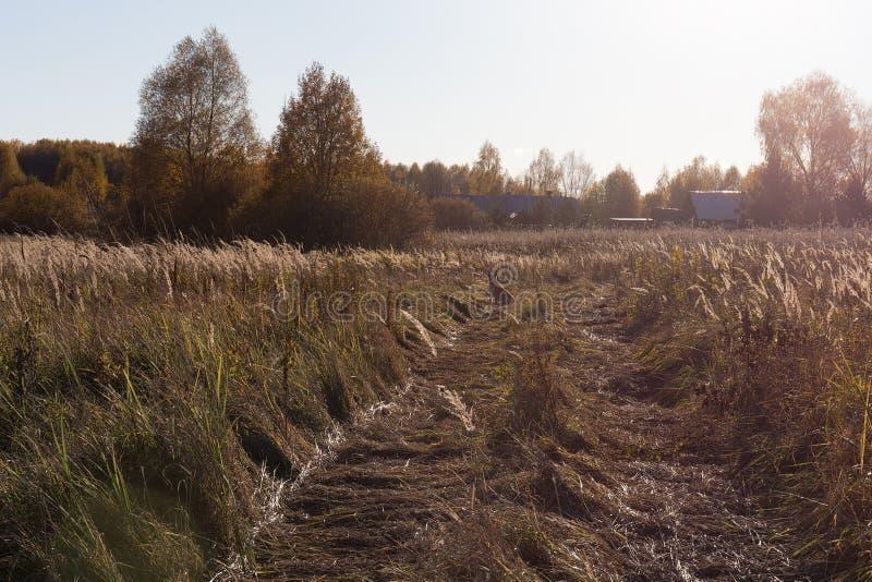 Landweg, die in de afstand gaan Rood gras in de weide De hond die door de zonzitting wordt aangestoken op de weg royalty-vrije stock afbeeldingen
