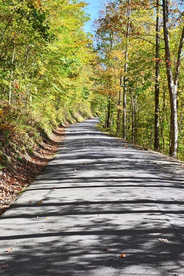 Landweg die een Bos doornemen royalty-vrije stock foto's