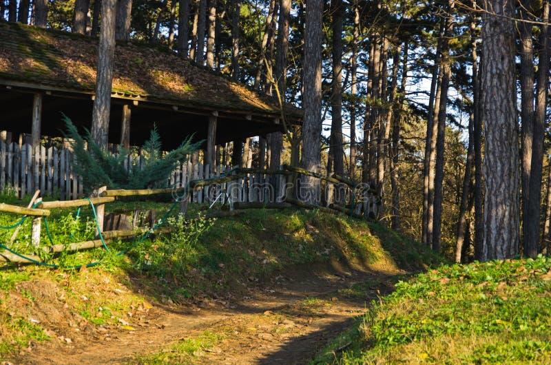 Landweg door bos bij zonnige de herfstdag, Deliblatska-pescara royalty-vrije stock foto