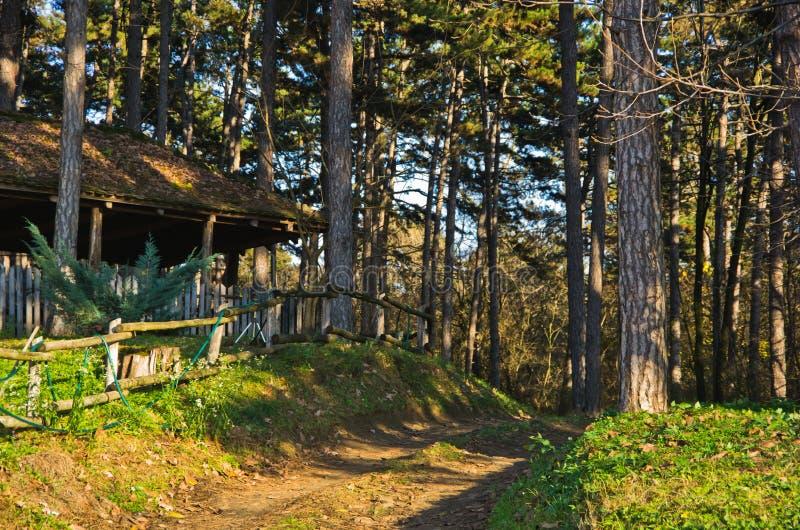 Landweg door bos bij zonnige de herfstdag, Deliblatska-pescara stock fotografie