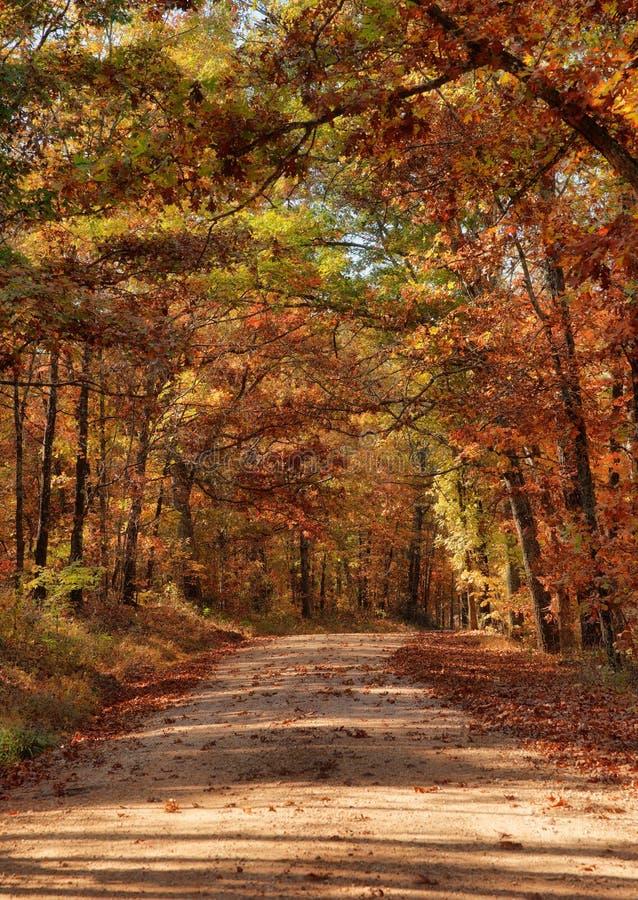 Landweg door de herfstbomen royalty-vrije stock foto