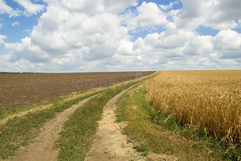 Landweg door een tarwegebied, blauwe hemel stock foto