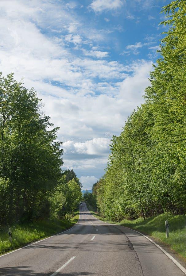 Landweg door groen bos stock afbeeldingen
