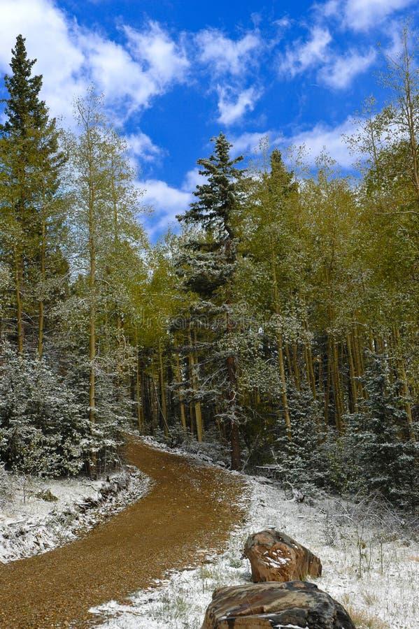 Landweg door het Bos stock afbeeldingen