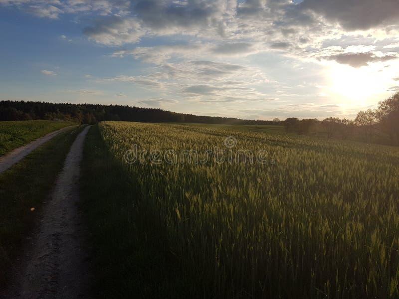 landweg door tarwegebied stock fotografie
