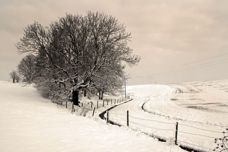 Landweg in een de winterdag stock foto's
