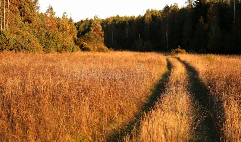 Landweg in een hout royalty-vrije stock foto's