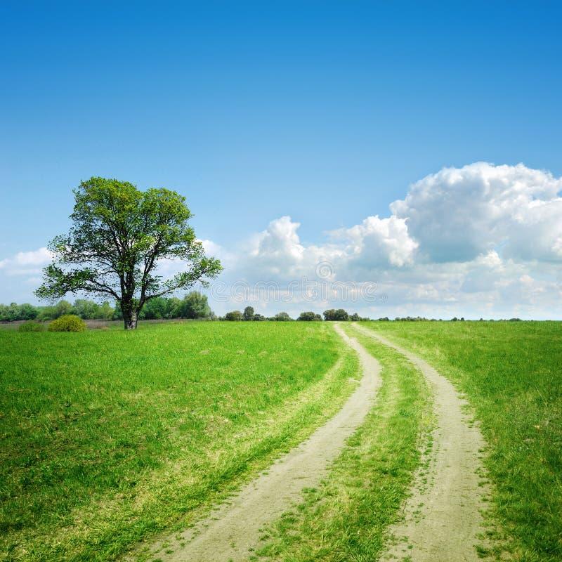 Landweg en boom op horizon royalty-vrije stock afbeeldingen