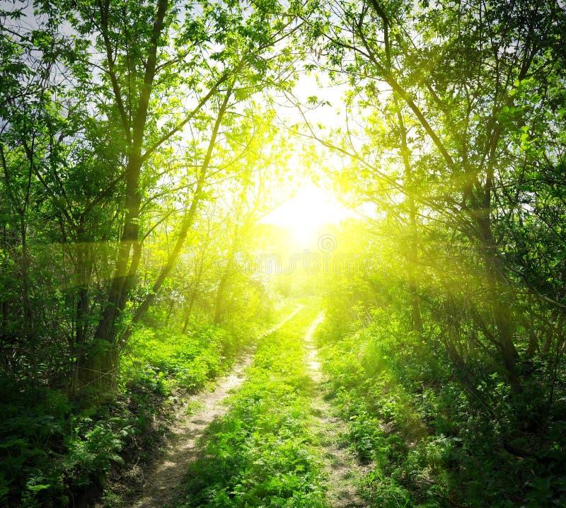Landweg en zonlicht stock fotografie
