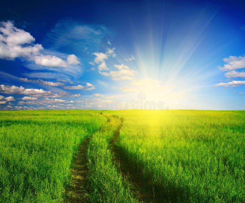 Landweg in gras en zonsondergang stock foto