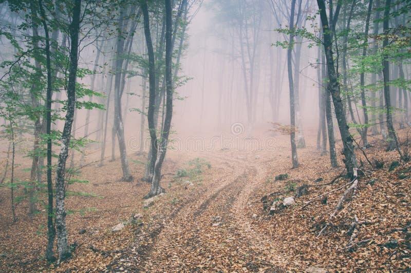 Landweg in het magische en mistige bos van de ochtendbeuk stock foto's