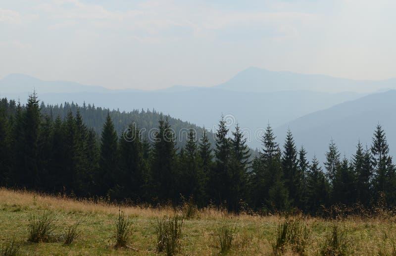 Landweg hoog in de bergen onder de lange pijnboombomen tegen de blauwe hemel royalty-vrije stock fotografie