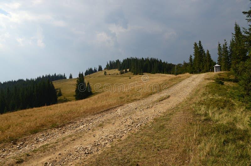 Landweg hoog in de bergen onder de lange pijnboombomen tegen de blauwe hemel stock foto