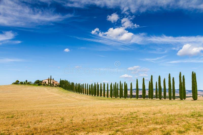 Landweg met cipressen in Toscanië, Italië wordt geflankeerd dat stock afbeeldingen