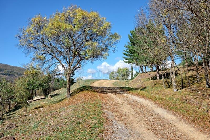 Landweg in Nebrodi-Park, Sicilië stock foto
