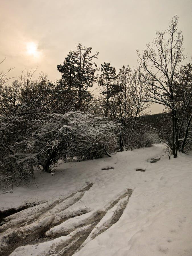 Landweg op een de winterdag met sneeuw wordt behandeld die royalty-vrije stock fotografie
