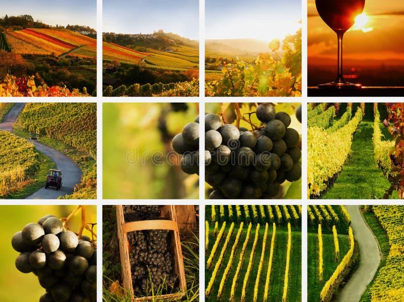 Landweincollage stockbild