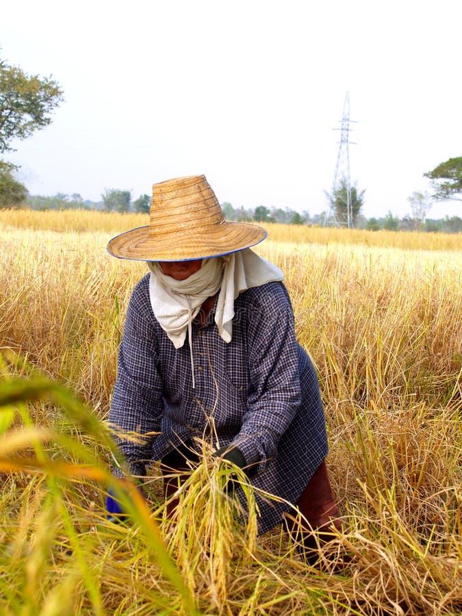 Landwirt 03 stockbilder
