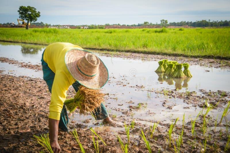 Landwirt lizenzfreies stockbild