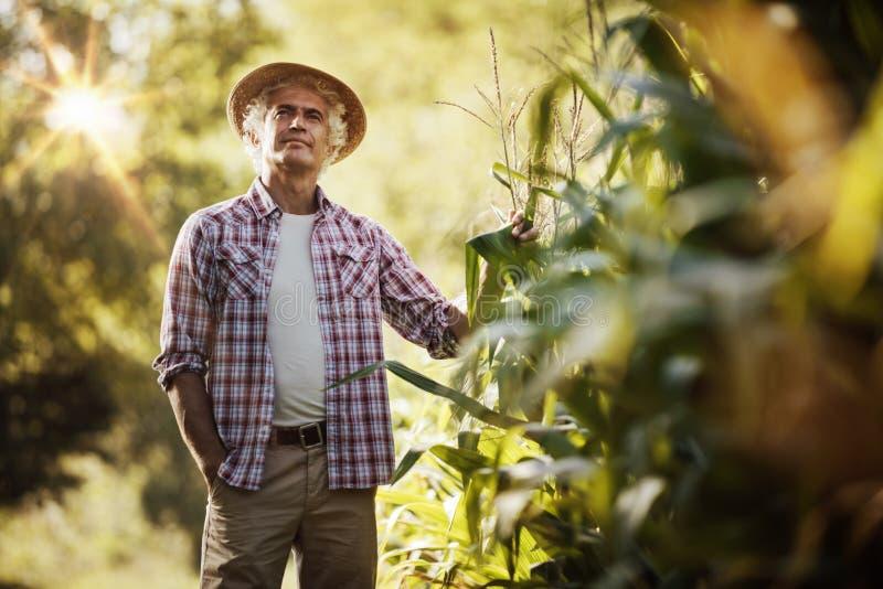Landwirt auf dem Gebiet lizenzfreies stockbild