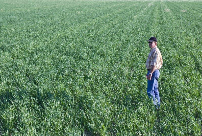 Landwirt auf dem Weizengebiet lizenzfreie stockbilder