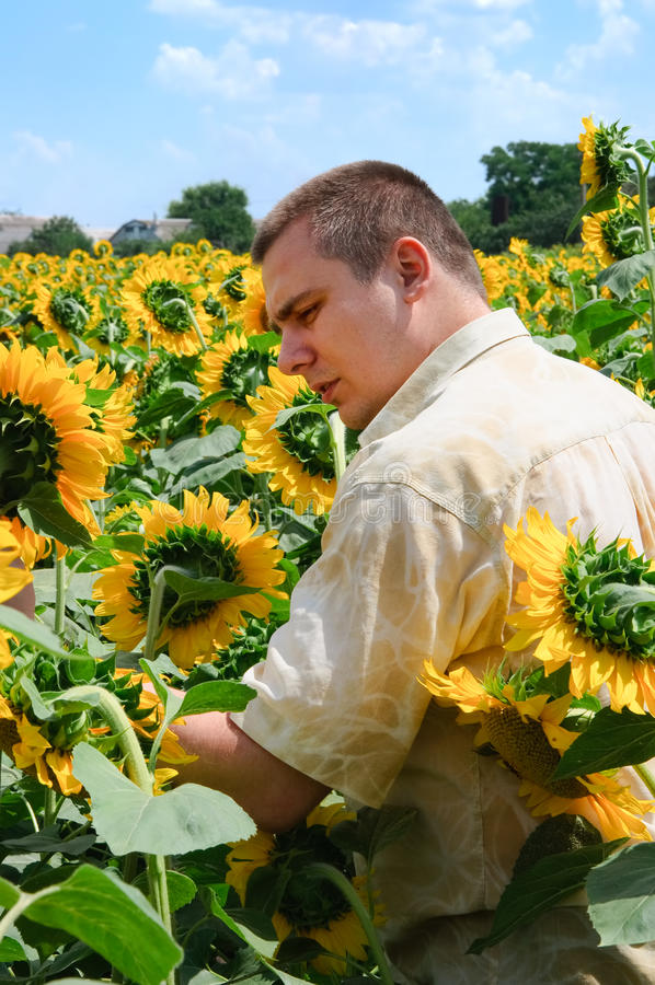 Landwirt auf einem Sonnenblumegebiet lizenzfreie stockfotografie