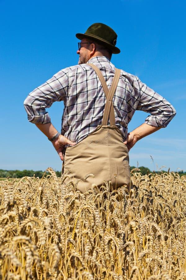 Landwirt auf einem Weizengebiet stockbild