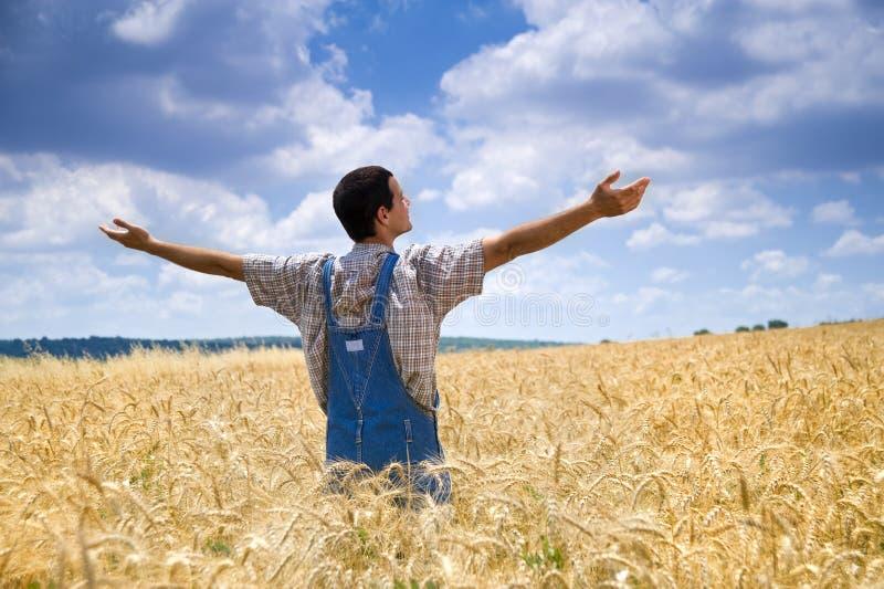 Landwirt auf einem Weizengebiet stockbilder