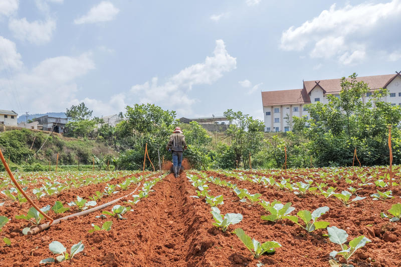 Landwirt auf Feld lizenzfreie stockbilder