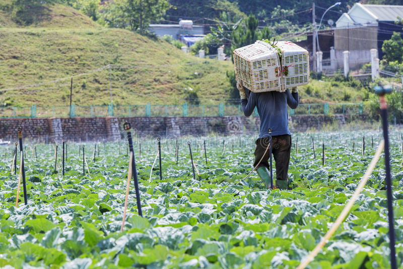Landwirt auf Feld lizenzfreies stockbild