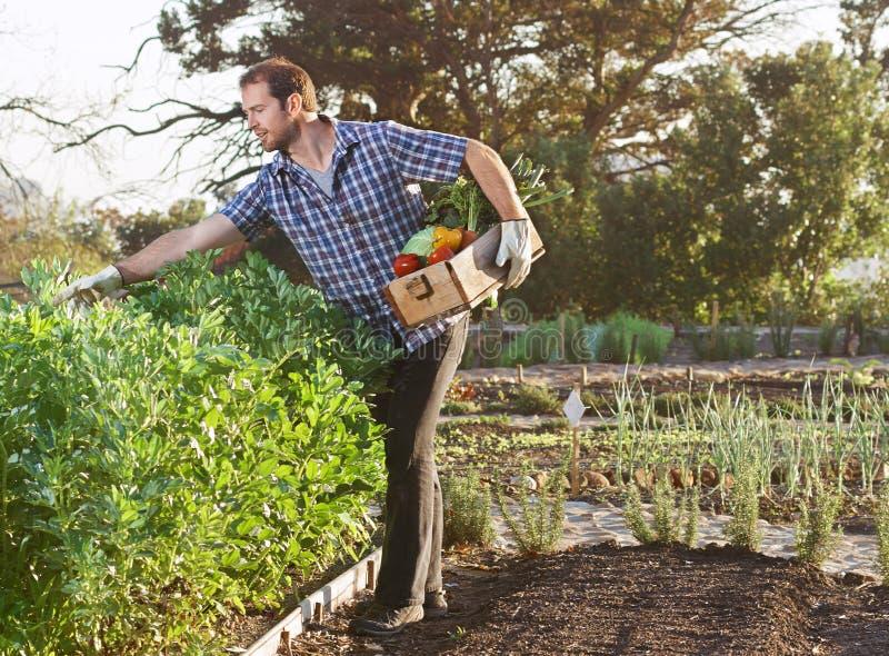 Landwirt auf lokalem stützbarem Biohof stockbild
