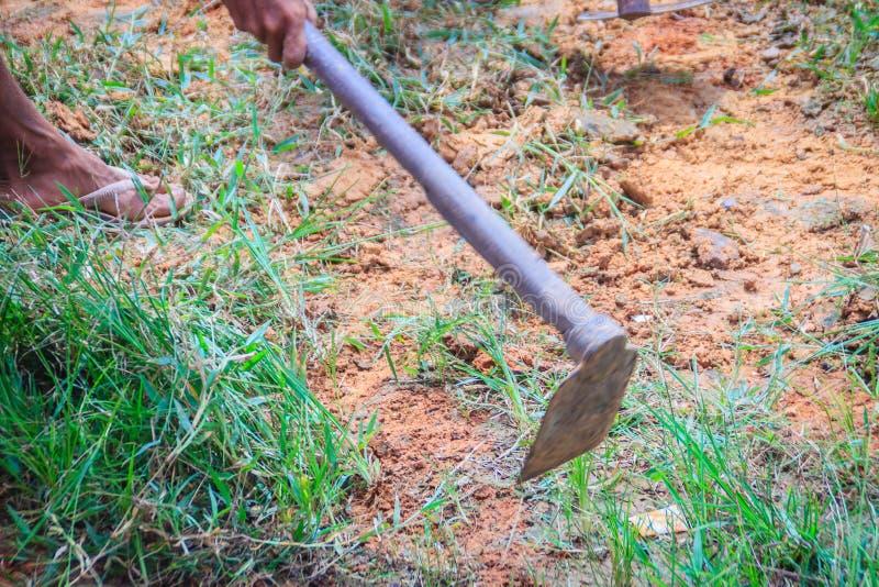 Landwirt benutzt Hacke, um Gras zu mähen I das Feld Mähen des Grases auf dem Gebiet mit Schaufel Hacke mit grünen Beschneidungsgr stockfotografie