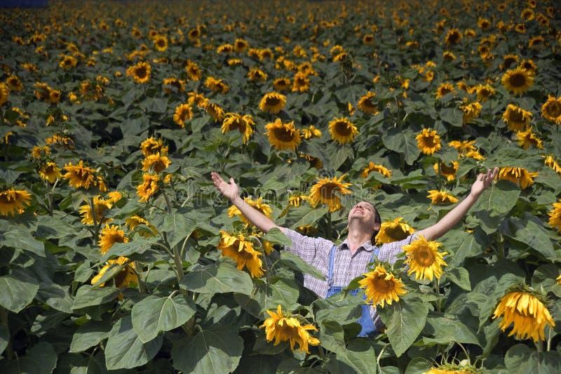 Landwirt in den Sonnenblumefeldarmen heraus ausgebreitet stockfotografie