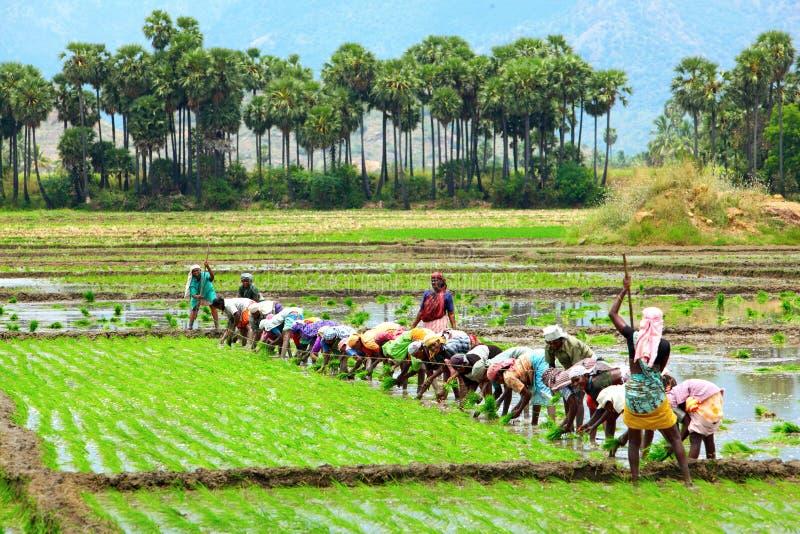 Landwirt, der auf den Gebieten pflanzt lizenzfreie stockfotos
