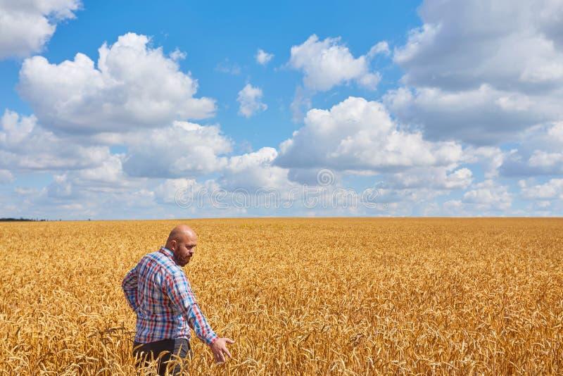 Landwirt, der auf einem Weizengebiet steht lizenzfreie stockfotos