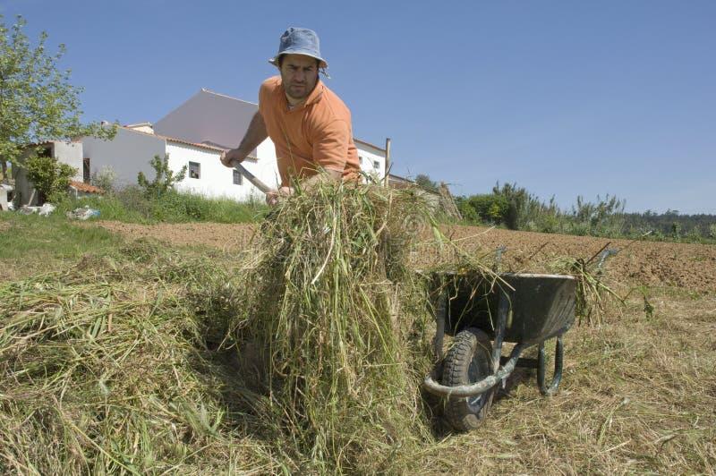Landwirt, der an dem Bauernhof arbeitet stockbilder
