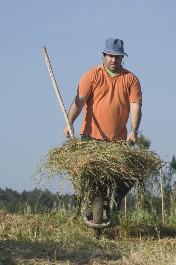 Landwirt, der eine Schubkarre mit einem Heuschober drückt stockfoto